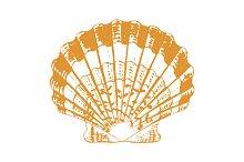 Vector Sea Shell Illustration