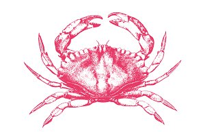 Vector Crab Illustration