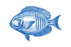 Vector Tropical Fish #2 Illustration