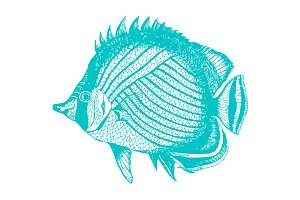 Vector Tropical Fish #3 Illustration