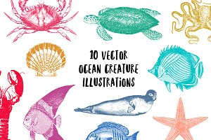 10 Vector Ocean Illustration Pack