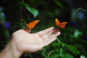 A man holding two butterflies