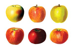 6 Vector Apple Illustration Pack