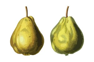 2 Vector Pear Illustrations