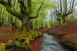 Otzarreta Forest