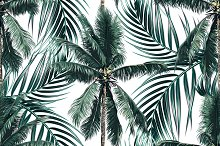 Tropical palm leaves, trees pattern