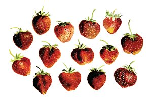 Vector Strawberry Illustration Pack