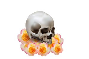 Realistic human skull on rose