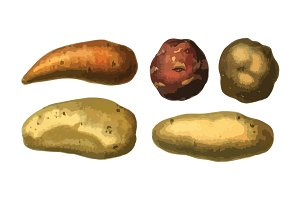 5 Vector Potatoes Illustration Pack