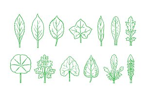 Contour Leaves Illustration Pack