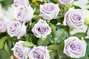 Bouquet of violet and purple roses