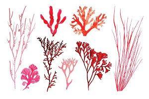 Vector Coral Illustration Pack