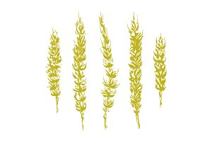 Vector Rough Wheat Illustrations