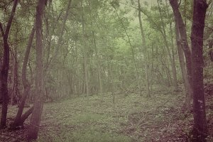 Lo-fi Northern Forest Snapshot 2