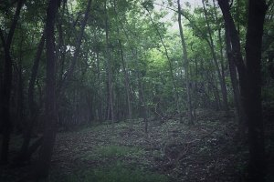 Lo-fi Northern Forest Snapshot 1