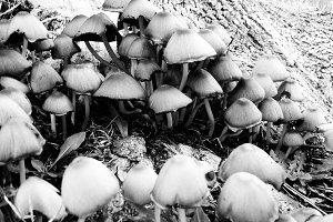 Lo-fi Mushroom Snapshot