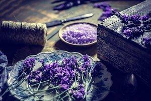lavender fresh flowers