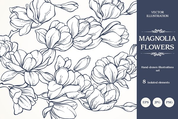 Linear vector magnolia flowers set