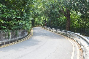Road with trees on both sides.