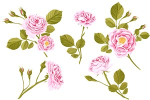 Set of roses: 5 vector + 5watercolor