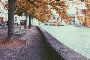 Autumn tree in Zurich, Switzerland