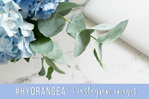 #Hydrangea. 4 Instagram images