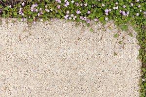 Sidewalk Flowers M