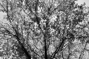 Lo-fi Walnut Branches