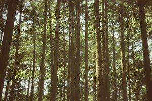 Lo-fi Sellwood Park Snapshot