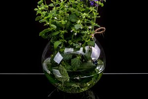 Aromatic herbs in glass