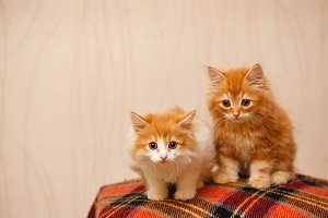 Two cute kittens sitting on plaid