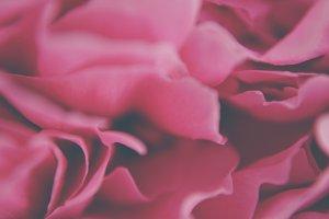 Rose Satin