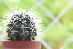 Green cactus on the windowsill