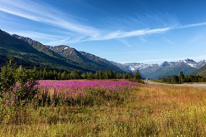 Fire Weed and mountains