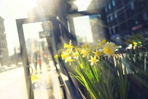 Yellow flowers. Spring