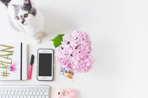 Flatlay Feminine desk Kitten-Flower