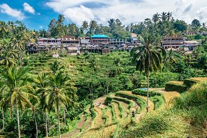 """Tegalalang Rice Terrace"" fields on terrace with mountain view of Ubud region, Bali, Asia. Bali landscapes."