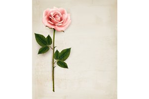 Single pink rose on old paper.