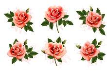 Beautiful set of pink roses.
