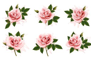 Beautiful set of pink roses.