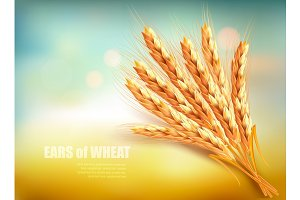 Ears of wheat.