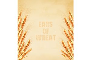 Ears of wheat on old paper.