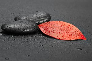 autumn red leaf and black stones