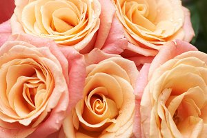 Bunch of orange and red roses