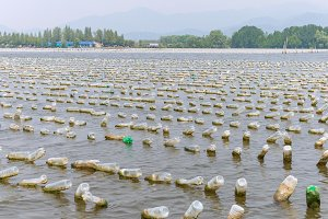 Shellfish farm from plastic bottles
