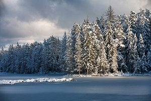 Lake in the ice and forest in winter