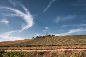 A field in Tuscany