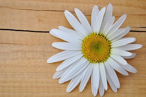 daisy on wood table