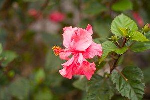 blooming pink flowers