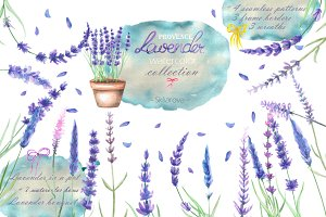 Lavender watercolor collection